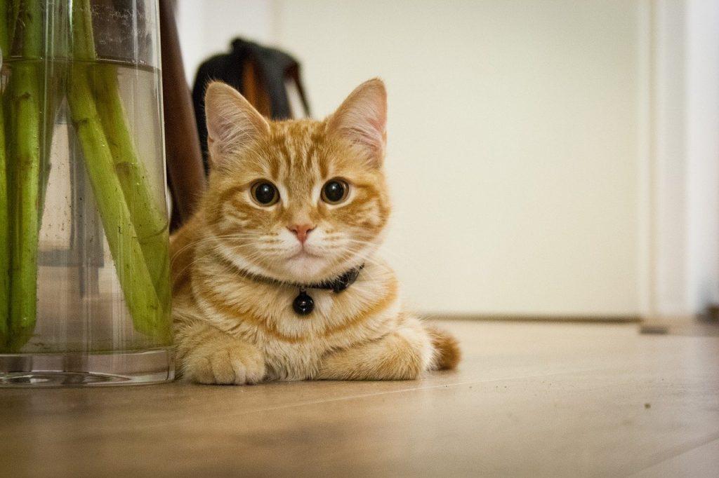 ペットを飼う費用:猫限定